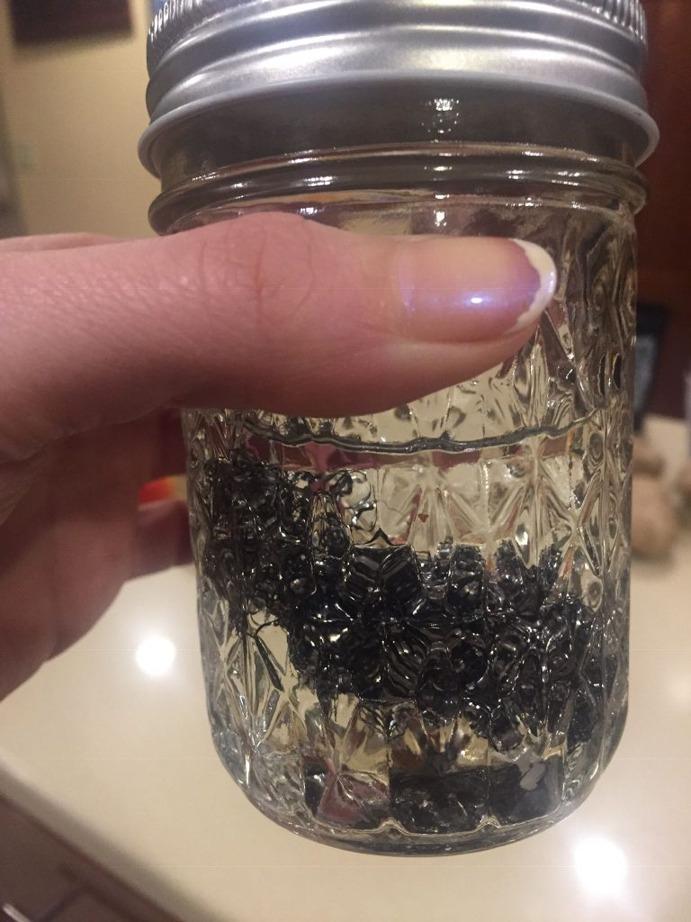 A picture of the homemade wood dye fail. The steel wool and vinegar did not react.